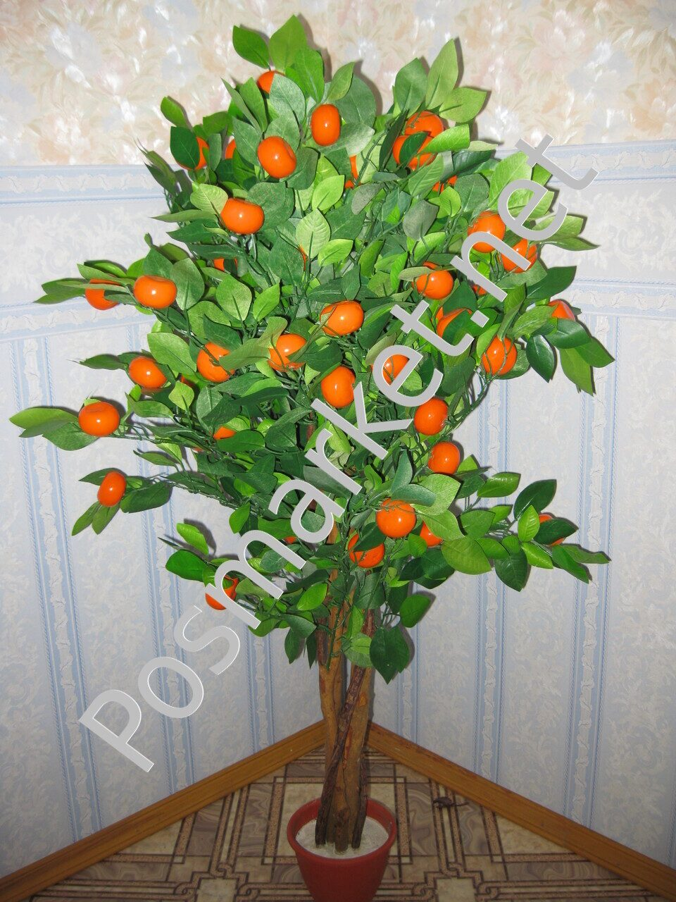 Как вырастить апельсин из косточки 67